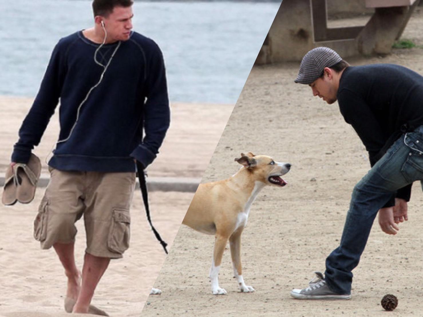 แชนนิ่ง เททัม ได้สุนัขตัวใหม่ จากการกำกับภาพยนตร์ เรื่องแรกที่ชื่อว่าด็อก